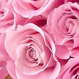 Muebles y decoración en rosa