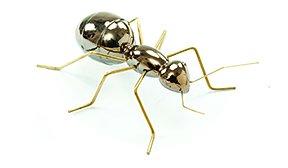 Hormiga Ant Gold
