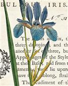 Cuadro canvas iris letter
