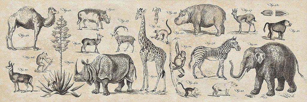 Cuadro canvas wild africa