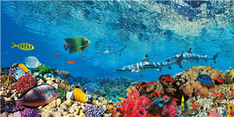 Cuadro canvas reef sharks and fish indian sea