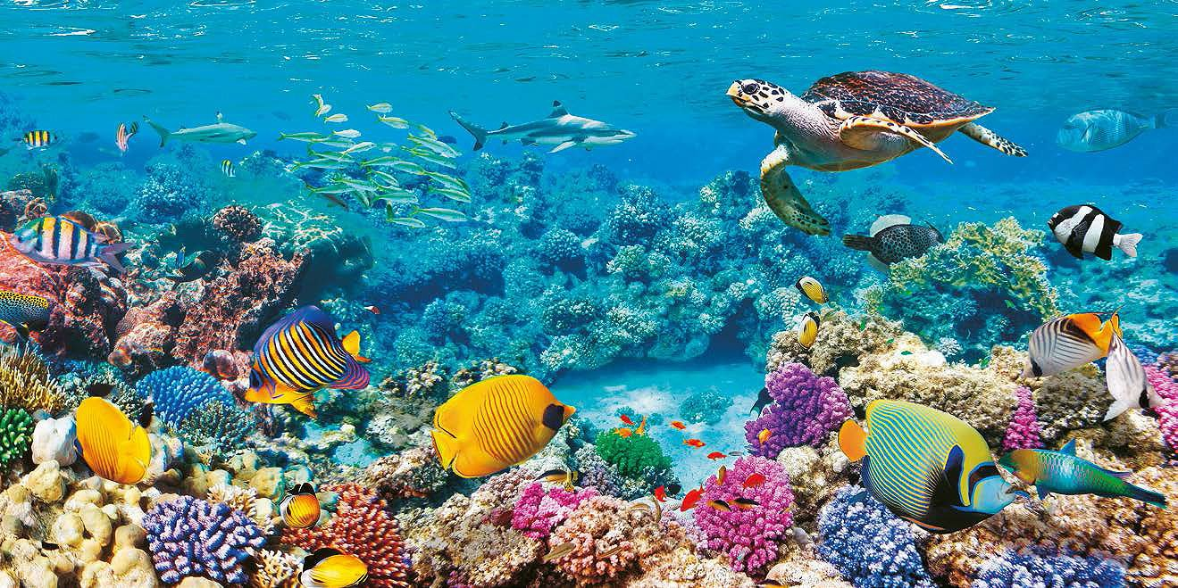 Cuadro canvas sea turtle and fish maldivian coral