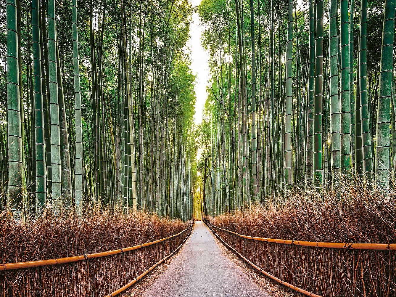 Cuadro canvas bamboo forest kyoto japan