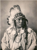 Cuadro canvas spotted jack rabbit crow 1898
