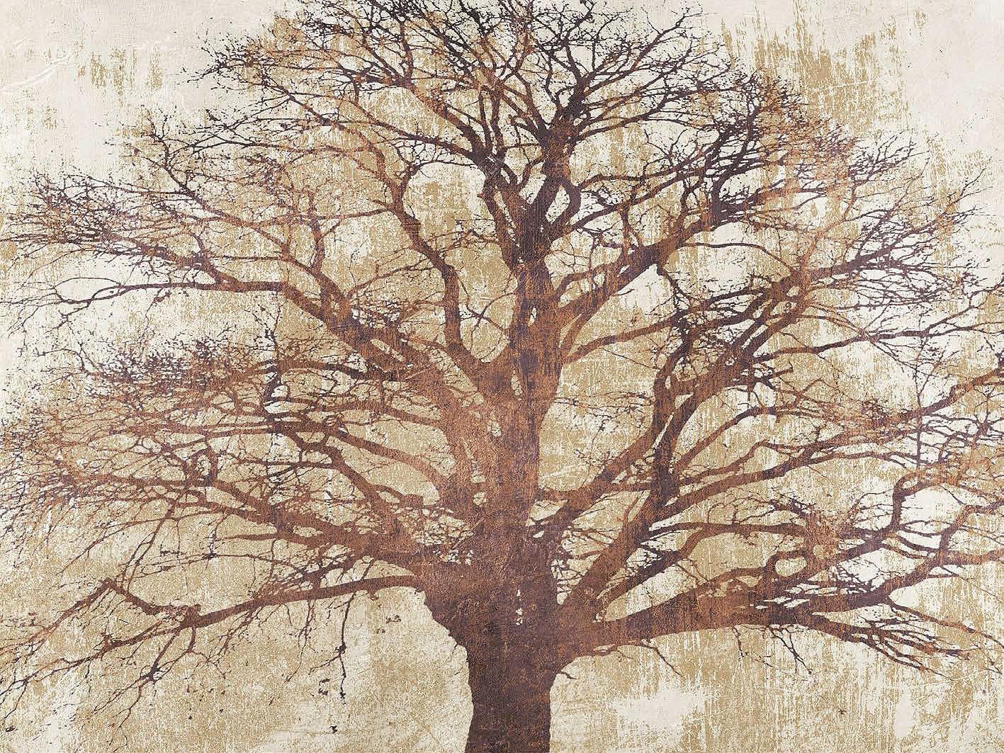Cuadro canvas sacred oak