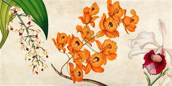 Cuadro canvas flores panneau botanique