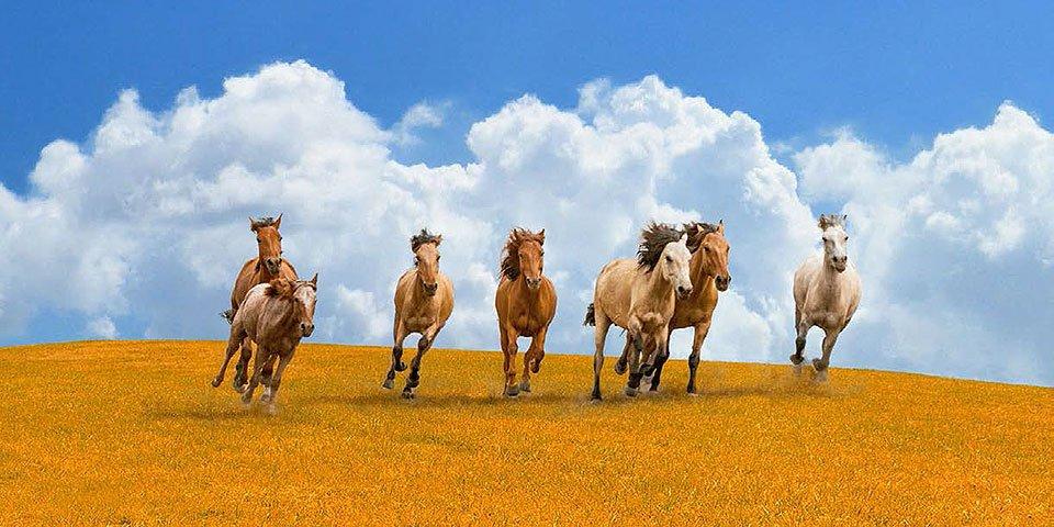 Cuadro canvas fotografia herd of wild horses
