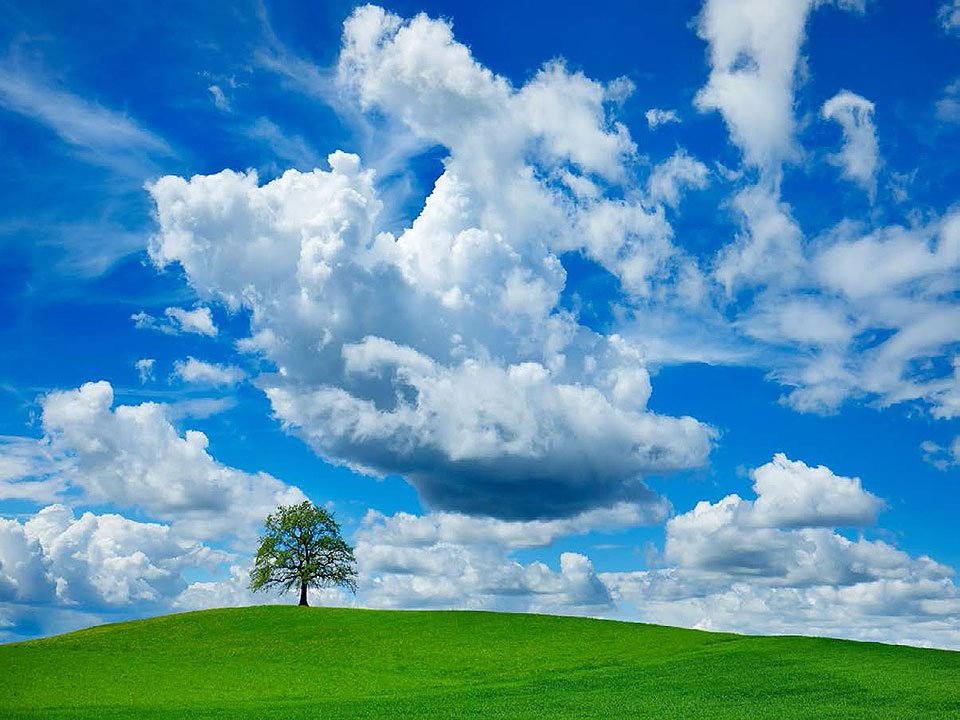 Cuadro canvas fotografia oak and clouds
