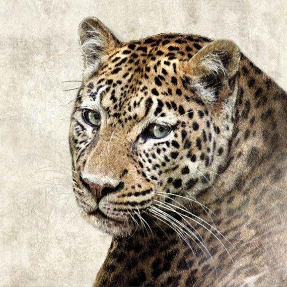 Cuadro canvas Jaguar