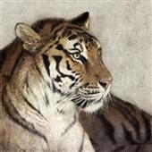 Cuadro canvas tiger
