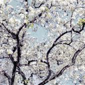 Cuadro canvas flore I