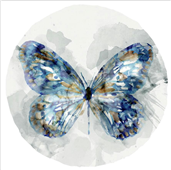 Cuadro canvas indigo butterfly III