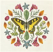 Cuadro canvas butterfly mandala III