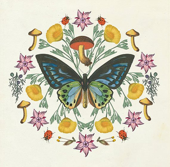 Cuadro canvas butterfly mandala IV