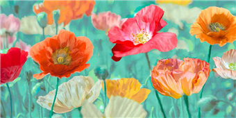 Cuadro canvas poppies in bloom