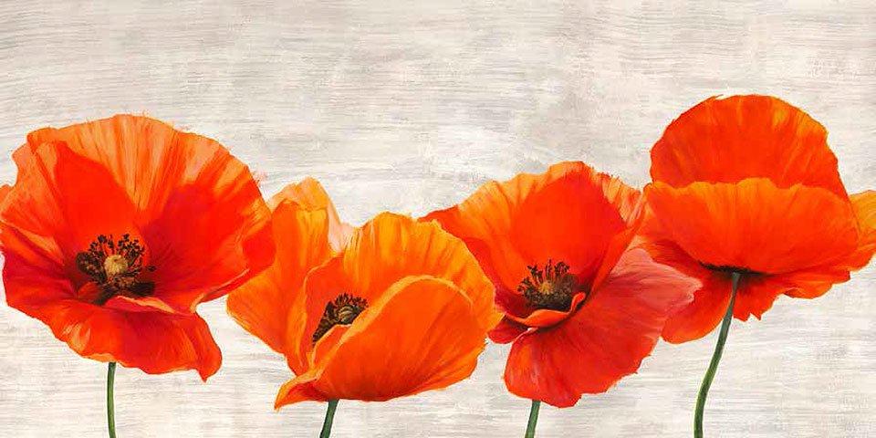 Cuadro canvas bright poppies