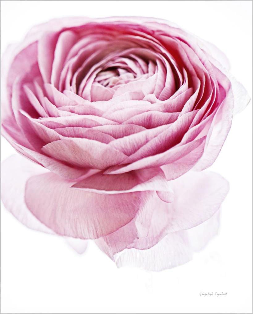 Cuadro canvas pink lady
