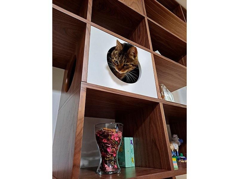 Librería de diseño Gatos