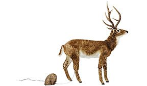 Figura decorativa Moving Sound Deer Fur