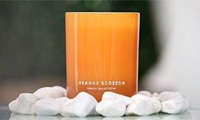 Vela Orange Blossom Valencia Special Edition