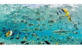 Cuadro canvas tropical fish in bora bora