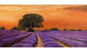 Cuadro canvas campo al tramonto