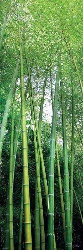 Cuadro Canvas Foret de Bambous
