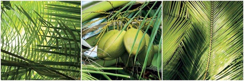 Cuadros Tríos Canvas Feuilles de palmier