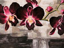 Cuadro canvas velvet orchids