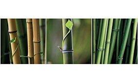 Cuadros Tríos Canvas Bambous